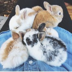 When you are looking for a furry companion that is not only extremely cute, but simple to have, then look no further than a family pet rabbit. Cute Baby Bunnies, Cute Baby Animals, Animals And Pets, Funny Animals, Cute Babies, Bunny Bunny, Bunny Rabbits, Pet Rabbit, Rabbit Life