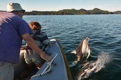 Porpoises riding the