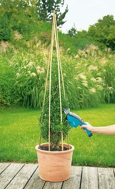 How to trim decorative shrubs by giving them special shapes – Practical ideas I have said and felt countless times that in the middle of nature we feel the best. The wonderful landscapes that… Boxwood Garden, Garden Shrubs, Terrace Garden, Garden Benches, Garden Plants, House Plants, Topiary Plants, Topiary Garden, House Landscape