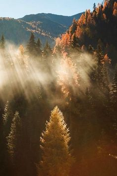 Mother Earth, Mother Nature, Beautiful World, Beautiful Places, Forest Mountain, Foggy Forest, Forest Road, Autumn Forest, Autumn Aesthetic