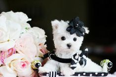 World Class Puppy Boutique Store Baby Animals Puppy Store