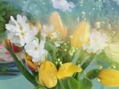 Lentegevoel   Spring Feeling