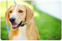 Richmond, VA - Hound (Unknown Type) Mix. Meet Franklin a Dog for Adoption.