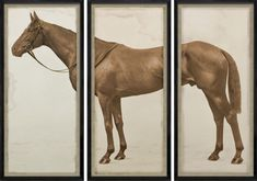 Natural Curiosities Lord Denver Horse Triptych Photo with Optional Frame Triptych Wall Art, Framed Wall Art, Framed Art Prints, Equestrian Decor, Equestrian Style, Hollywood Arts, Natural Curiosities, Royal Ascot, Horse Photos