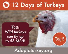 Save a Life this Thanksgiving: Adopt a Turkey