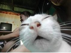 Little guys gotta sneeze Funny Profile Pictures, Funny Cat Pictures, Funny Images, Animal Pictures, Reaction Pictures, Fluffy Animals, Cute Animals, Baby Animals, Cool Cats