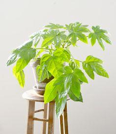5 plantas fáciles de cuidar<br/> 5 easy indoor plants | Dr. Livinghome. DIY moderno y decoración ecléctica