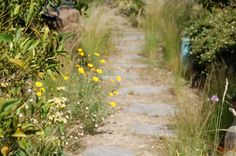 "Natural path in the ""Garden of the Citrus"""