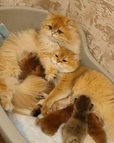 - your daily dose of funny cats - cute kittens - pet memes - pets in clothes - kitty breeds - sweet animal pictures - perfect photos for cat moms Cute Funny Animals, Cute Baby Animals, Animals And Pets, Funny Cats, Cute Cats And Kittens, Kittens Cutest, Orange Kittens, Beautiful Cats, Animals Beautiful