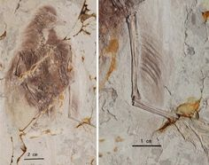 Prehistoric Birds May Have Used Four Wings to Fly  http://j.mp/Wl7H42