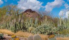 Phoenix: Desert Botanical Gardens; South Mountain; eat at Los Dos Molinas, Los Olivas,and Pizzeria Bianco; Taliesin West Frank Lloyd Wright;