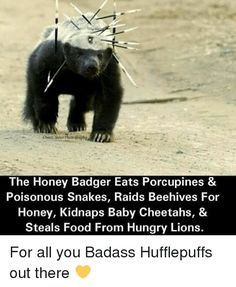 Image result for cute baby honey badger