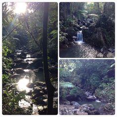 El Yunque...Beautiful!!!