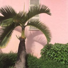 Boca Pink