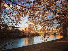 L'autunno potrà piacere o meno ma di sicuro è la stagione con i colori migliori.  Bravissimo @gianfranco_lamaida abbiamo scelto la tua foto come BEST OF THE DAY of #igerspisa!  Corri subito a condividere e taggare la tua foto dal nostro profilo Instagram o sulla nostra pagina Facebook!  #botdpisa by igerspisa