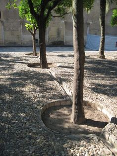 1000 years old? We can learn a lot from arid areas and their controlled collection and use of water.  Here, basins around each tree are linked to catch, slow and convey rainwater.