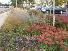 Garden Ideas For Minnesota beautiful minnesota garden - love the variety and the ornamental