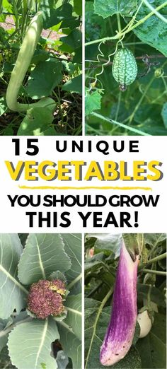 Growing unique vegetables is a fun way to experiment in your backyard vegetable garden. Whether you grow food in containers, raised beds or in the ground, trying unusual vegetables is a great way to expand your palate. Plus its fun too! Growing Green Beans, Growing Greens, Growing Flowers, Organic Gardening, Gardening Tips, Growing Vegetables At Home, Growing Squash, Raising Farm Animals