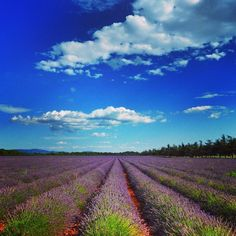 Provence, France. Lavender lane. Valensole. —@mygreatescapes