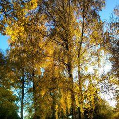 Autumn in my garden  / Ann-Sofi Sweden