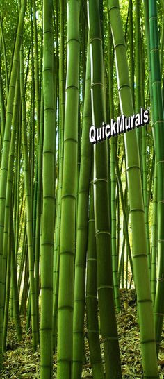 Bamboo Grove Peel & Stick Door Mural by QuickMurals Large Wall Murals, Door Murals, Wall Spaces, 1 Piece, How To Remove, Doors, Adhesive, Homestead, Cave