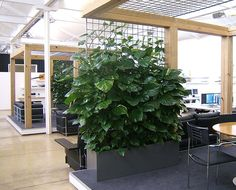 Can we integrate plants/nature into our work environment? - Private meeting rooms in an open plan office area - the lungs of this creative workspace - using indoor plant climbers in troughs for a contemporary setting.
