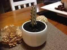 Euphorbia lactea variegata (White Ghost)