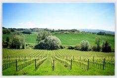 Italy's Green Heart - Umbria near Perugia. www.ciutravel.com