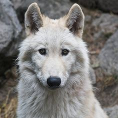 Huge Victory! Northern California Wildlife Is Now Protected From Trapping & Aerial Gunning