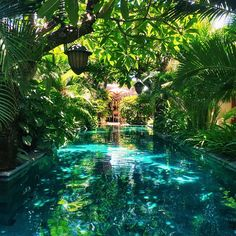 phineloves's photo on Instagram Amazing Swimming Pools, Home Swimming Pool, Luxury Swimming Pools, Swiming Pool, Dream Pools, Cool Pools, Tropical Backyard, Tropical Houses, Tropical Forest