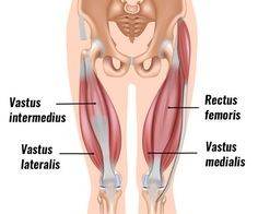 Quadriceps Tendonitis (Tendinopathy) - Sportsinjuryclinic.net Quad Muscles, Thigh Muscles, Shoulder Muscles, John Travolta, Thigh Muscle Strain, Squat, Quadriceps Femoris, Physical Therapy, Glutes