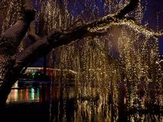 lights in wheeping willow - Google Search