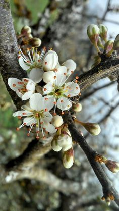 Blackthorn flowers. When I was younger I was constantly compared to the Blackthorn Fairy ever since these flowers have held a special place in my heart. They also seem to have a simplistic beauty and I feel this picture captures that perfectly.