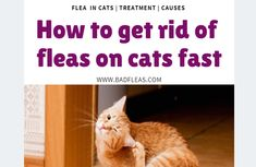 If you are a cat owner, you know too well how a cat that is friendly and happy boosts any household. While there are little-hidden… Best Dog Food, Best Dogs, Tick Removal Dog, Dog Rash, Get Rid Of Ticks, Dog Training Near Me, Flea Treatment, Cat Skin