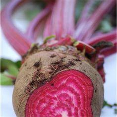Graines de betterave crapaudine bio sur le site www.semences-bio.com pour 3.50 € le sachet seulement.