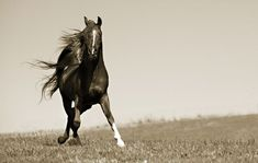 1000+ images about Arabian Horses