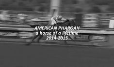race horses | Tumblr