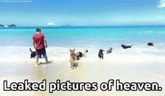 Leaked pictures of heaven! Sunny skies, white sand, and DOGS! Animals And Pets, Funny Animals, Cute Animals, I Love Dogs, Puppy Love, Creature Feature, Pet Memorials, Animal Quotes, Dog Life