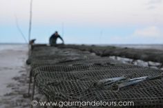 terra Ostrea Gourmandetours - parc à huîtres