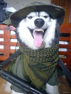 Captain Husky says it's Drill Time!