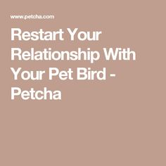 Restart Your Relationship With Your Pet Bird - Petcha