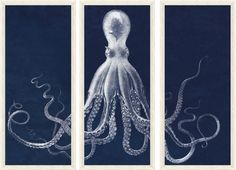 Lord Bodner's Octopus Study Triptych Print