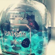 Patron bottle fish tank