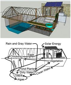 Hydroponic Gardening Ideas This family converted an unused swimming pool into a greenhouse that grows produce tilapia fish, and chickens for eggs. (There must be some mistake though, why would rainwater go with gray water? Aquaponics Diy, Aquaponics System, Hydroponic Gardening, Aquaponics Greenhouse, Solar Energy, Solar Power, Renewable Energy, Pond Plants, House Plants