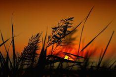 Poderosa Oração Para Orar na Madrugada Sunset, Ely, Instagram, Love Of God, Pray, Psalms, Father, Sunsets