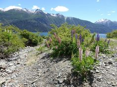 Linda DV (back again) posted a photo:  Argentina. Patagonia.  Chubut Province.  Los Alerces National Park.  Lake Rivadavia is a lake of glacial origin located in the province of Chubut, Argentina, in the department Futaleufú. It has an area of approximately 2,200 hectares and occupies a narrow valley surrounded by beautiful landscapes of forests.  It is almost entirely enclosed in Los Alerces National Park, which protects its natural vegetation. Despite being away from large populations…
