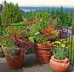 Many beautiful container planting ideas.