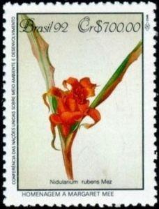 Atlantic Forest, nidularium rubens