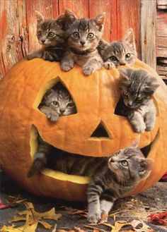 Cute little kitties in a pumpkin