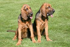 Bloodhounds would want to play 20 Questions, because they like to figure things out.